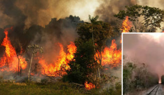 How did the Amazon Rainforest fire start? Cause, scope, and how you can help