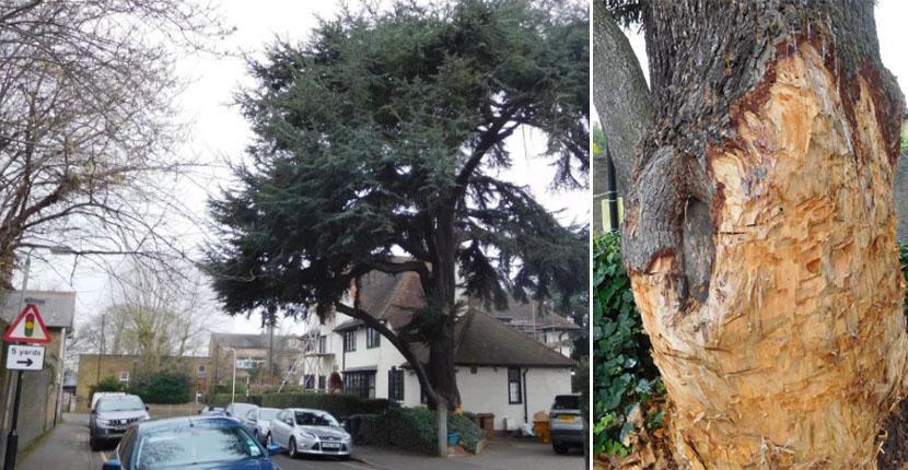 Homeowner fined £60,000 for vandalising a Tree to kill it after council twice refused to let him chop it down